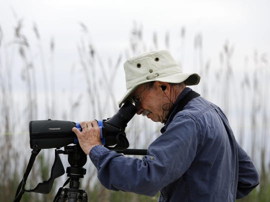 Steve Gates of Princeton NJ, a volunteer in his 18th season with Shorebird Project, conducts a ratio count to identify banded birds.