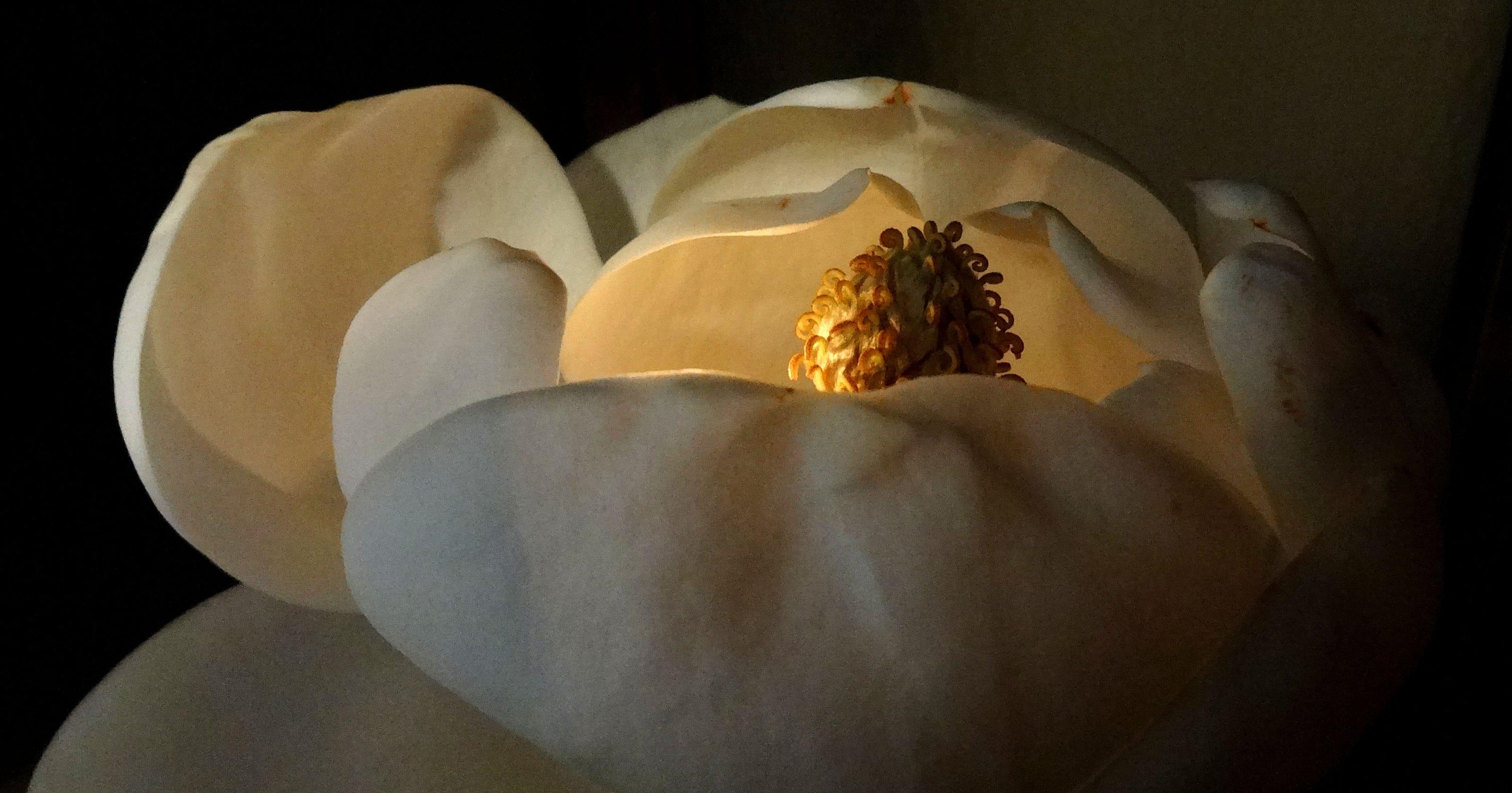 States Oldest Magnolia In Full Bloom
