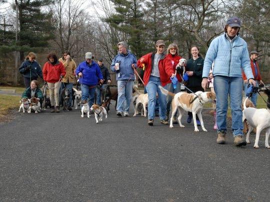 Dogs and their walkers celebrate the new year on a
