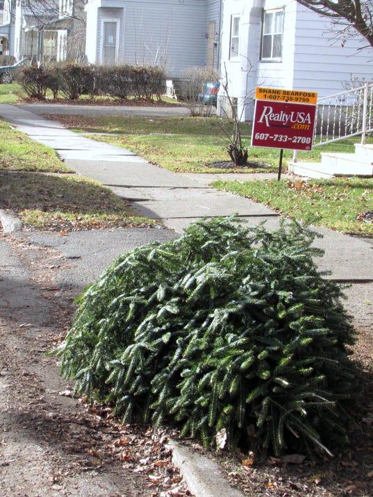ELM-discarded-christmas-tree.jpg