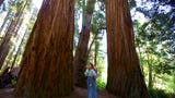 Take a road trip to Jedediah Smith Redwood State Park