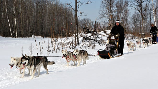 Novice mushers ride through the snow on the Bayfield peninsula during an outing with Wolfsong Adventures in Mushing.