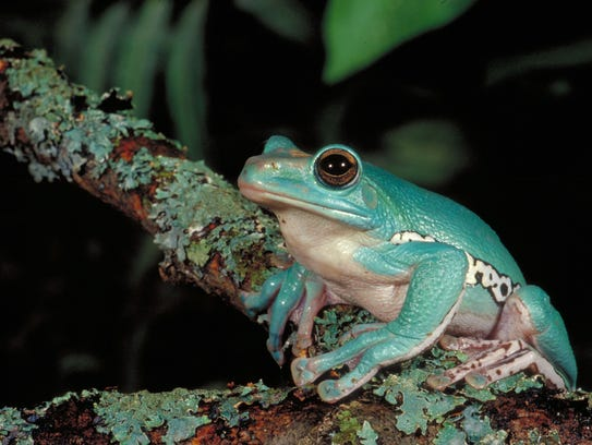 Some frogs blend into their backgrounds, making the