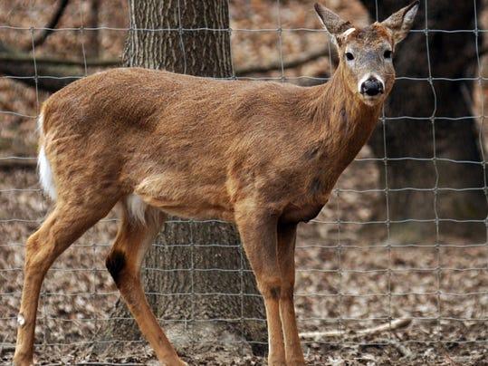 white-tailed deer farm