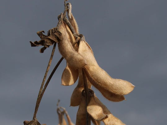 farm- Soybean.jpg