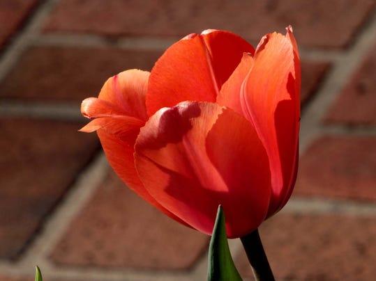 fea- Flower Bloom.jpg