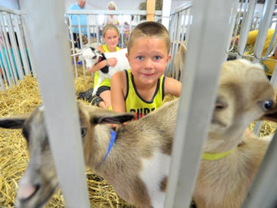 Goats being prepared for judging during the 2014 Wisconsin