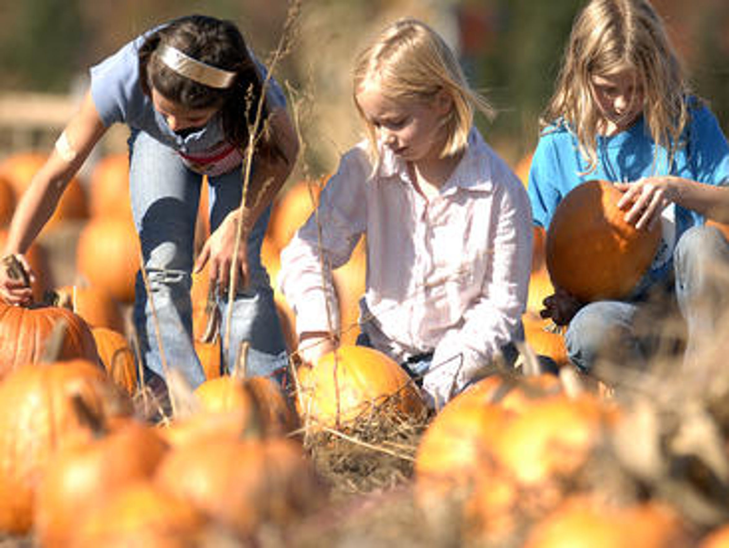 Three youngsters pick out pumpkins from Wilke's Dairy