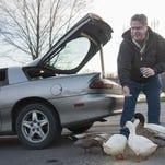 Every day around sundown, after he gets off work, Jersey Joe Allen heads to Owen Park to feed the ducks.