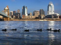 Ducks swim along the banks of the Ohio River Tuesday morning on the Covington side. Cincinnati shut down its water-intake valves on the Ohio River late Tuesday night in order to avoid potential contamination from the West Virginia chemical spill.