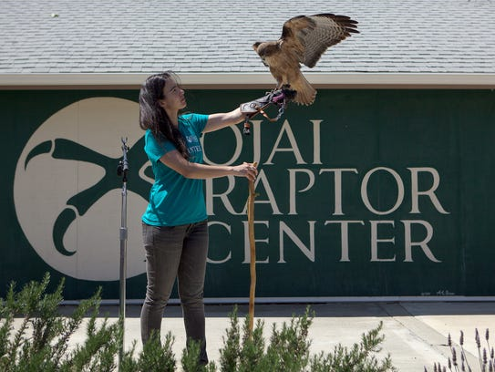 Rio Vogt shows off Rosie, a red-tailed hawk, during