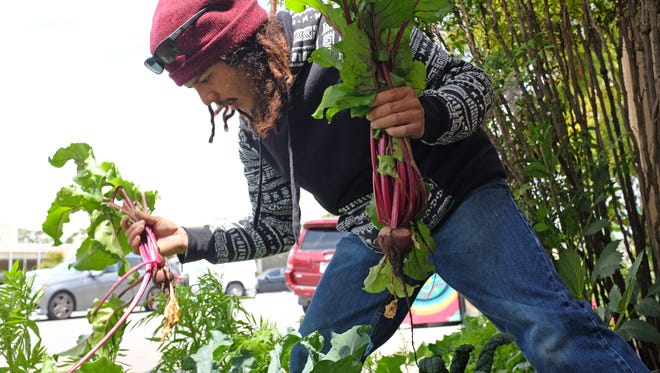Urban Arts Collaborative's Luis Rodriguez at work in the group's garden at 215 Lincoln Avenue in Salinas.