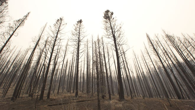 The forest is burned along Highway 191 about two miles south of Alpine from a 2011 fire.