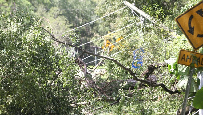 An uprooted tree falls on the backyard fence of a resident on Sedona Loop, near Miccosukee Road and Fleischmann Road. It fell across power lines along Miccosukee Road.