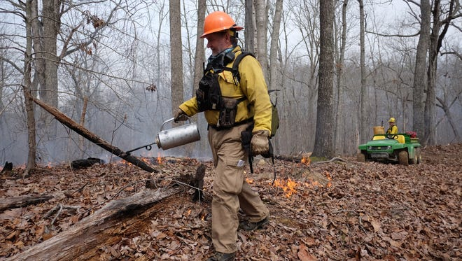 TWRA's Freddy Kelley uses a drip torch to administer the prescribed fire Monday, March 20, 2017, on Thief Neck Island in Roane County. Prescribed fires prepare sites for seeding of native grasses, control insects and diseases, as well as, improving habitats and enhancing the aesthetics and access for recreation. If left unchecked, invasive species can choke-out native plant species harming the Valley's eco-system.