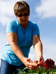 Michelle Ovans points out the seeds inside the flower of a peony plant at Ovans Peony Farm west of Merrill on Monday.