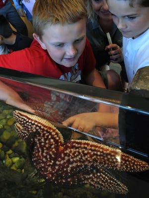 CHUCK KIRMAN/THE STAR Cole Wenger (left) and Benjamin Preudhomme look at a sea star at the Channel Islands National Park visitor center in Ventura. Students on a field trip from Rio del Mar School toured educational areas, walked through the outdoor garden, listened to lectures, watched a film and visited the observation deck.
