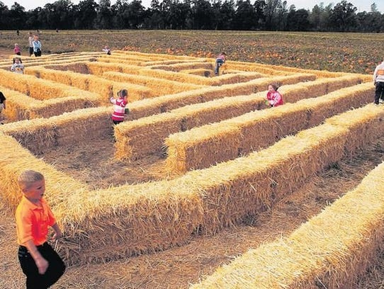 Hawes Farms' annual activities centered around Halloween were mentioned by Shasta County officials as a type of agritourism they want to promote in the county.