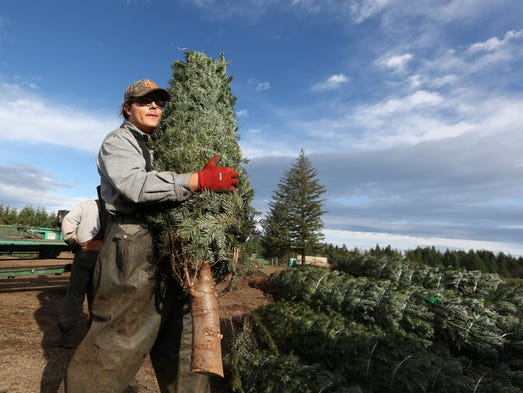 Christmas Tree Farms In Salem Oregon