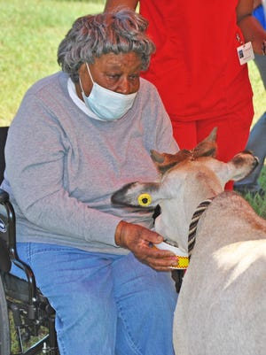 Idella Simpkins feeds Tanya the zebu during a visit by Eudora Farms on August 11.