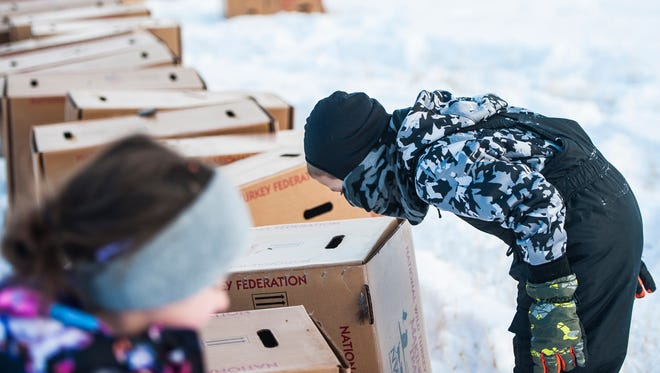 Brayden Hammond, 6, peeks at turkeys through box air holes. The birds, eager for freedom, charge against the box walls and cause them to bounce.