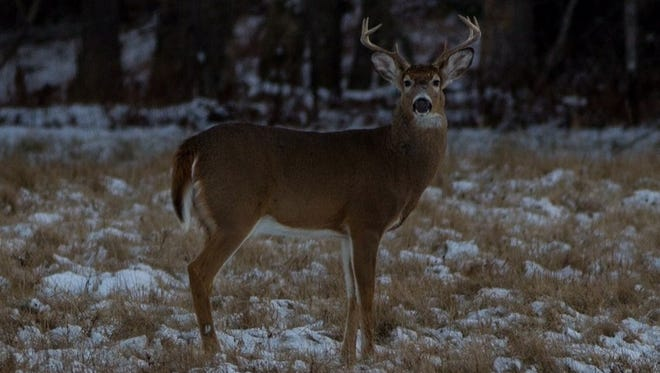 Nice bucks like this are easier to see with snow on the ground.