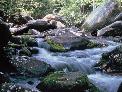 A short drive from D.C. lets you trade in the city for the forests, waterfalls and wildlife of Shenandoah National Park.