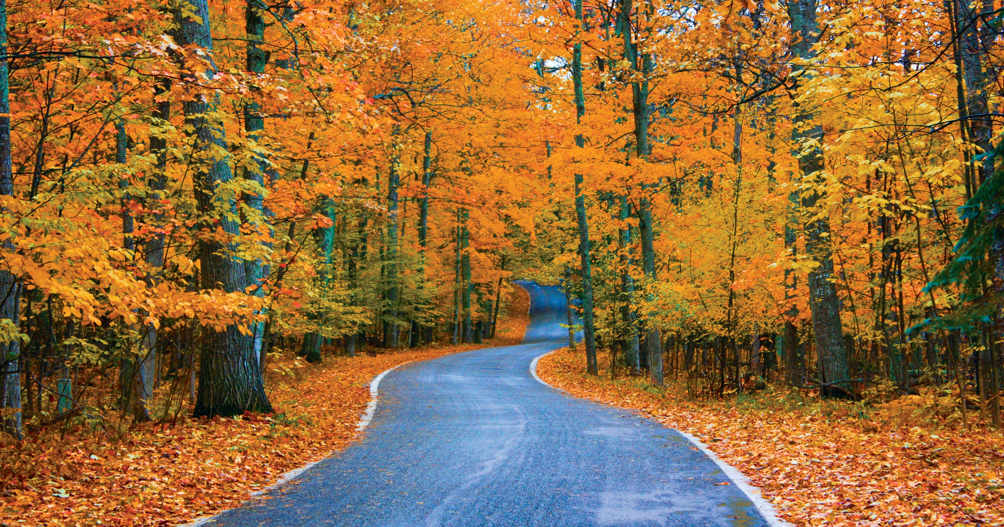 michigan s top fall color spot is tunnel of trees