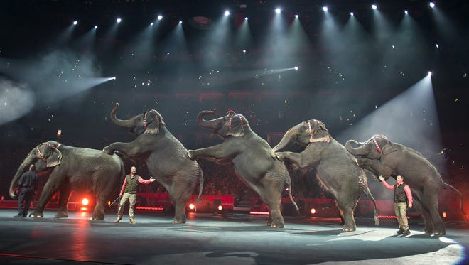 Elephants have been performing in the Ringling Bros. and Barnum & Bailey Circus since 1870. They will be phased out of the show by 2018.