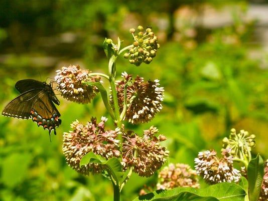 Gardening-Monarch Way Stations (2)