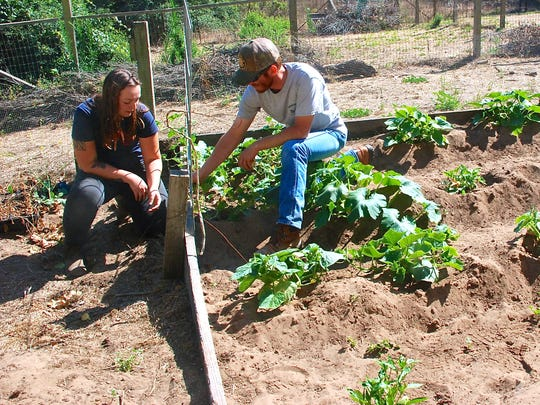 Clarke and Ponce check cantaloupe plants in an outdoor garden at Cole Canyon Farm. The farm grows about 250 varieties of plants.