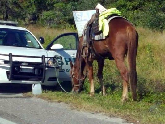 DUI Horse