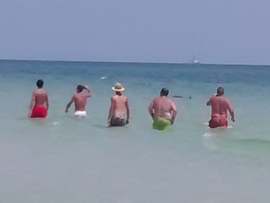 A few brave men try to get closer to the shark swimming along Langdon Beach on Saturday afternoon.