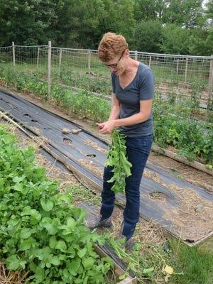 Jean-Marie Crahan picks radishes at Bean Head Farm.