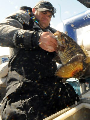A fisherman pulls a bass out of a live-well during the Sturgeon Bay Open Bass tournament last spring. The Toyota Bassmaster Angler of the Year Championship is coming to Sturgeon Bay in 2015.