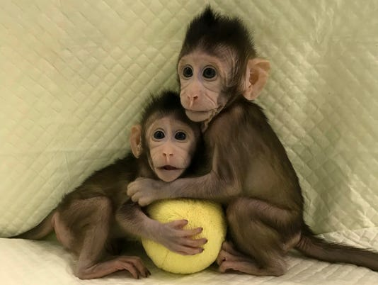 Cloned_monkeys