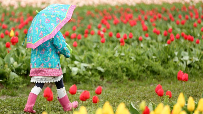 Zoe Duffle, 5, of Portland, walks between rows of flowers during the Wooden Shoe Tulip Fest outside Woodburn on Sunday, April 15, 2018. The festival continues through May 6.