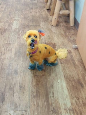 A Cherry Hill pet groomer is offering spooky styles, cuts and colors for Halloween.