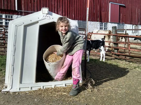 Vivian Lichty, 7, loves her family's Registered Holsteins and is just starting to get involved in dairy showmanship. She was heartbroken and in tears to hear that her parents, Dori and Steve, might have to sell the cattle and exit the dairy business. The family is one of 75 who received termination notices from Grassland Dairy Products last week. The company will no longer buy milk from their Beaver Dam-area farm as of May 1