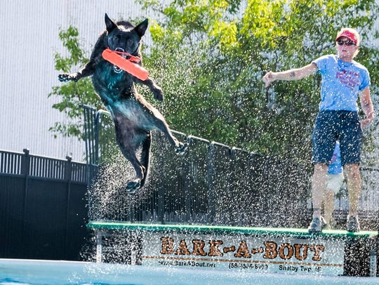 Dogs can learn to dock dive and swim at Bark-A-Bout