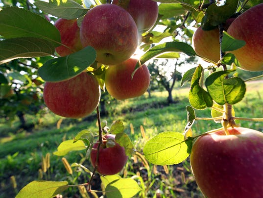 Southeast Michigan Apple Orchard Cider Mill Guide For 2017