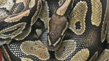 Woman charged with 7 counts of cruelty to animals in reptile case