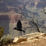 Photos: Top 10 things to do at the Grand Canyon