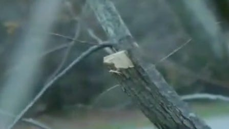 Vandals have damaged trees in the Boone County Arboretum.
