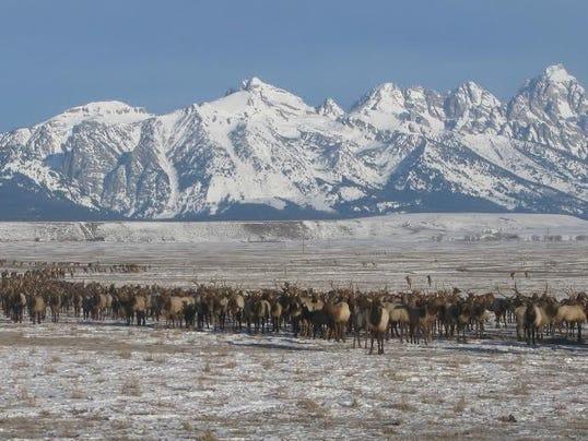 national elk refuge.jpg