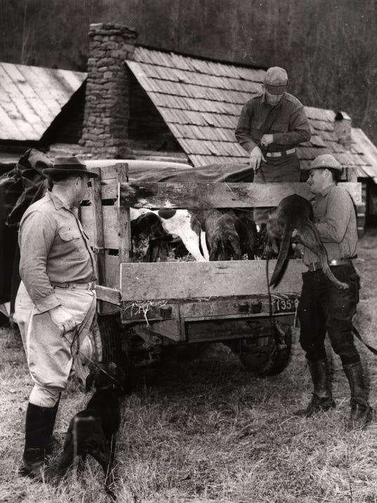 Plott-hounds-Bryson-City-AC-T-1942.jpg
