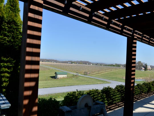 View of the vineyard at Barren Ridge Vineyards