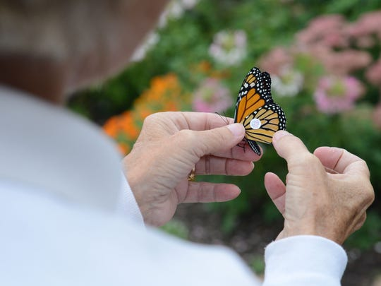 Mona Rutger tags a monarch butterfly at Back to the Wild in Castalia on Thursday, Sept 11, 2014.