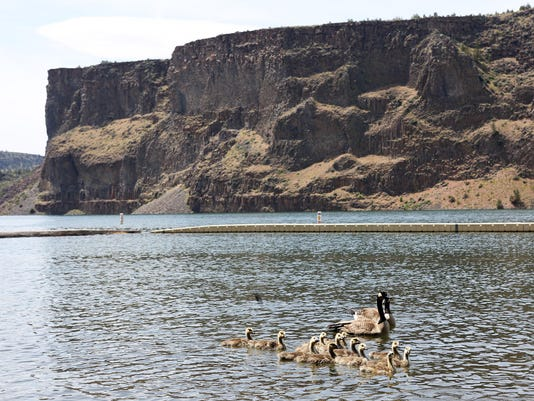 OUTDOORS COVE PALISADES SP