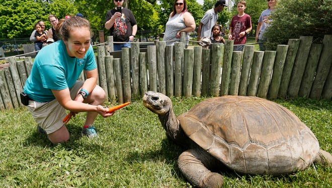 Head zookeeper Heather Woody offers a carrot to Boxie, a female Iguana Cove Galapagos tortoise, as zoo patrons look on Wednesday, May 16, 2018, at the Columbian Park Zoo. Boxie came to Columbian Park Zoo in 2009. She is leaving Lafayette for a zoo in Akron, Ohio.